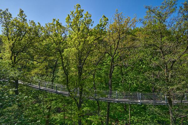 Auf dem Baumwipfelpfad in Bad Harzburg