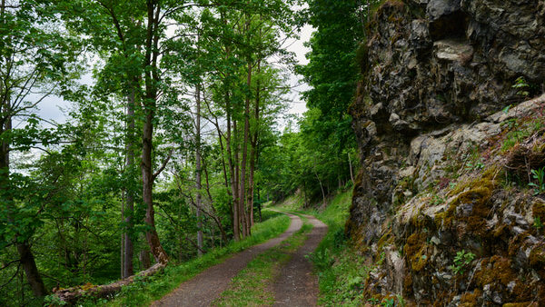 Im Wald nahe Hohegeiss im Harz
