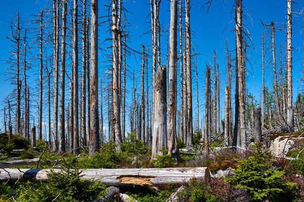 Jede Menge Totholz im Harz