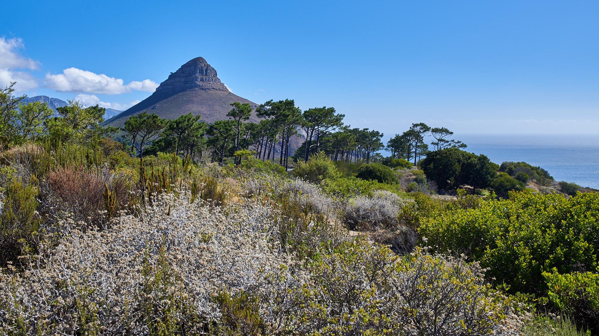 Blick vom Signal Hill auf Lion`s Head