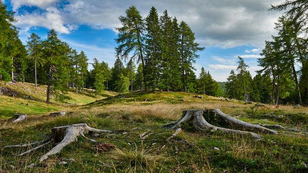 Im Wald nahe Hafling